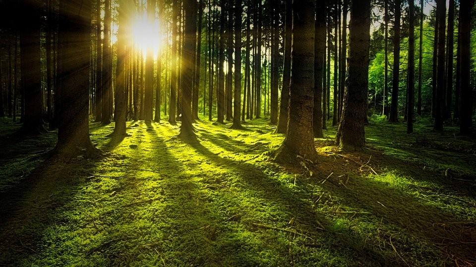 目には見えない光もある?光の種類についてわかりやすく解説   株式 ...